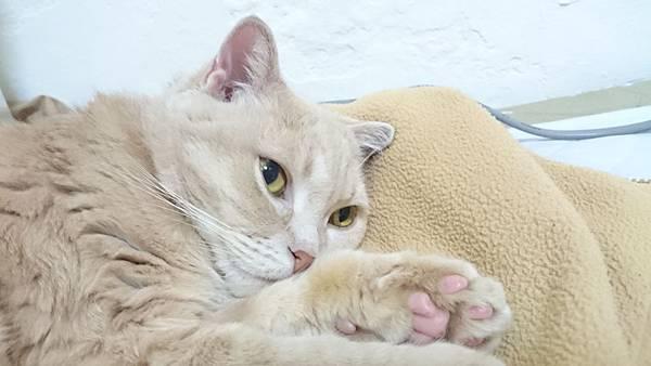 貓:是誰打擾朕睡眠?  20150308-Sony-D6653