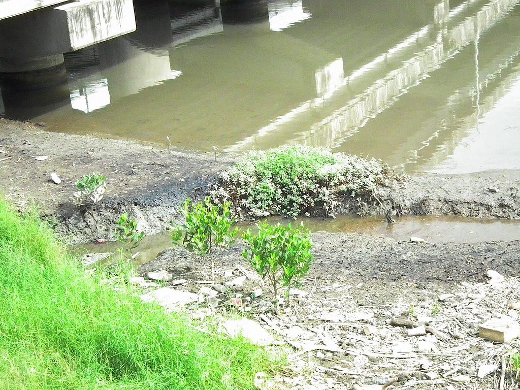 20100701-高美溼地污染-DSCF0370.JPG
