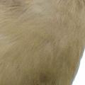 02 1000mm Abdomen E30+Sigma50-500mm 鷦鶯