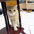 好奇心可殺死一隻貓~奴~ 20080124-Olympus-C770UZ