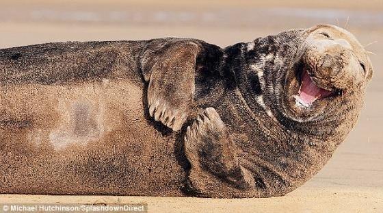 笑得最開心的海豹^o^