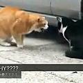 背叛女友的貓