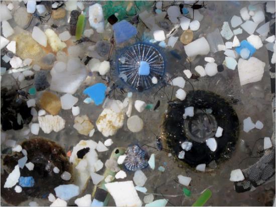 塑膠碎片:海洋垃圾帶(垃圾旋渦)