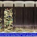 海洋塑膠碎片範本(以顆粒大小分類)