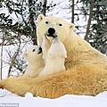 寶寶在親吻熊媽媽