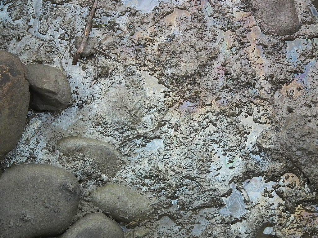 20100701-高美溼地污染-DSCF0332.JPG