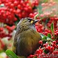 杉林溪 藪鳥