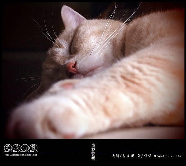 綿花糖似的睡姿-2011-Olympus-EPL2