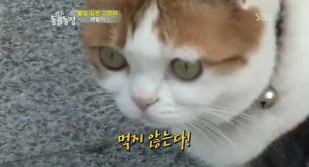 [影片] 韓國寺廟貓 超靈性 吃齊念佛不殺生 還會落淚 解脫的故事