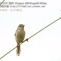 01 E30+Sigma50-500mm 鷦鶯