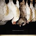 PETA 如果是我們的寵物被倒吊屠宰?
