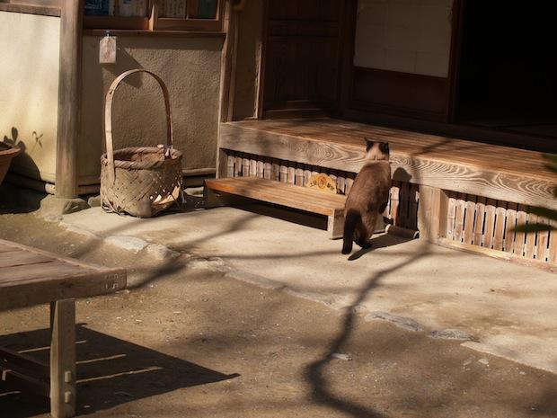 嵐山寺院與貓