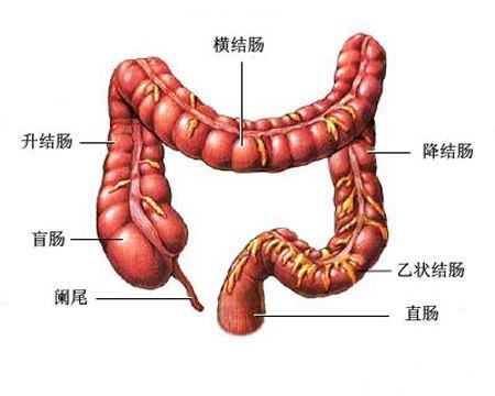 我與「大腸」為伍的日子