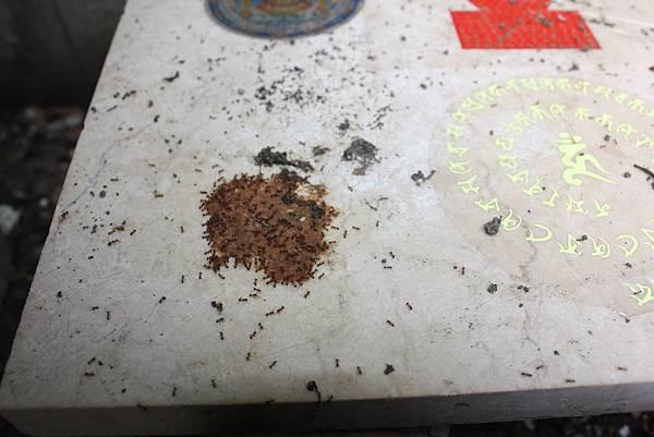 101年3月19日螞蟻爬咒輪 004_調整大小