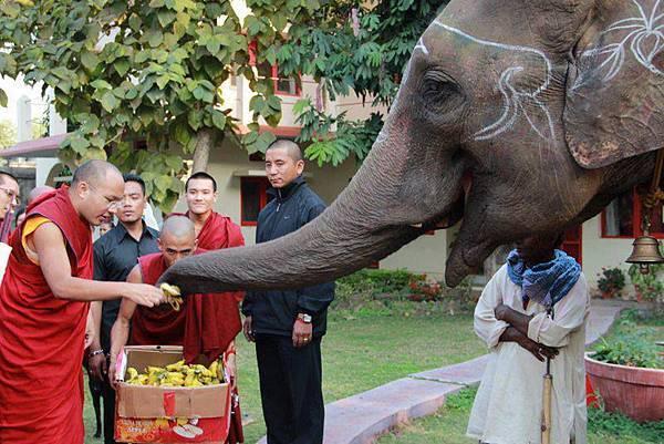 大寶法王餵大象吃香蕉