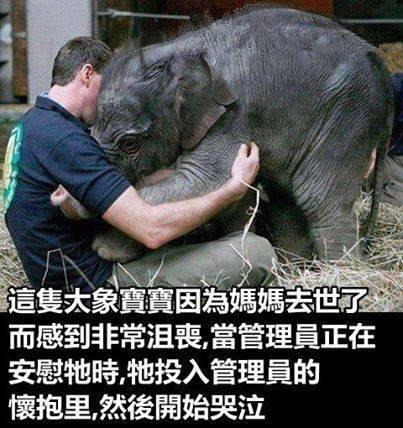 失去媽媽的象寶寶