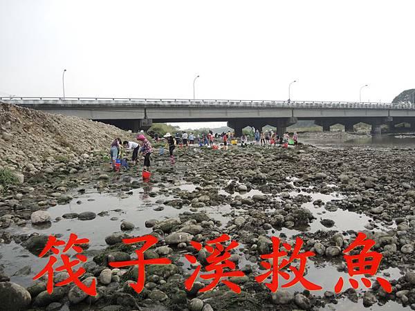 01筏子溪救魚.JPG