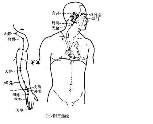 醫藥與健康-掌拍手臂通三焦 內分泌永不失調