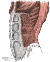 200px-Grays_Anatomy_image392