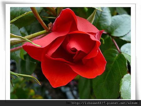 flower of love.jpg