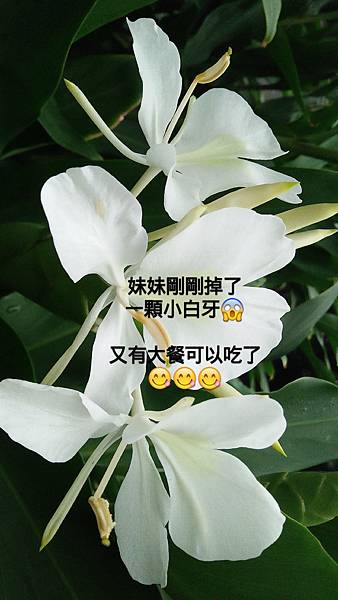 IMG_20171123_195447_311.jpg