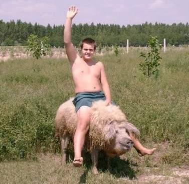 綿羊豬滅絕41年後再現 (7)