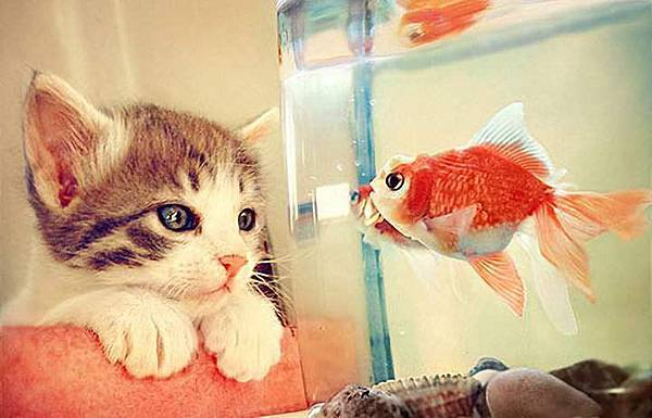 Kitten Babysitting Fish