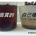 5.黑芝麻 (1).jpg