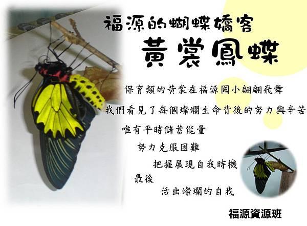 黃裳鳳蝶.jpg