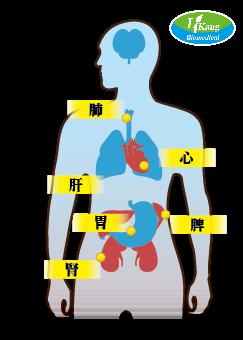 器官圖-Logo
