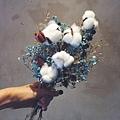 乾燥花-木棉花,喜歡生活乾燥花,鬼怪花束