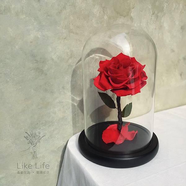 永生花紅玫瑰玻璃罩,台北永生玫瑰花推薦,喜歡生活乾燥花店