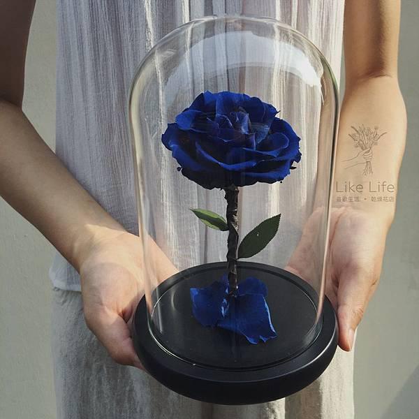 永生花藍玫瑰玻璃罩,台北永生藍玫瑰推薦,喜歡生活乾燥花店
