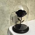 永生花,台北永生玫瑰花黑色永生花-喜歡生活乾燥花店