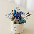 咖啡廳開幕開幕盆栽,乾燥花盆(小藍)-2.jpg