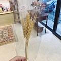 乾燥花材台北推薦,乾燥稻穗乾燥小麥.JPG