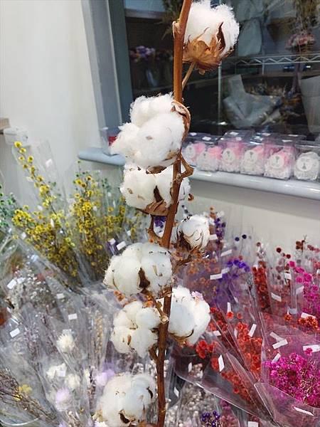 乾燥花材料那裡買-乾燥木棉花,棉花.JPG