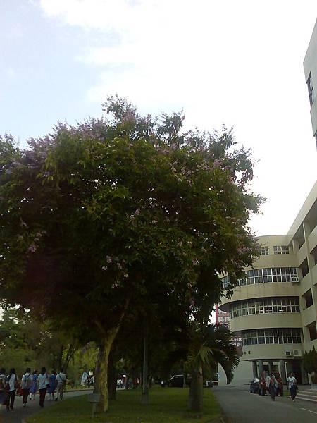 0502學校的大樹