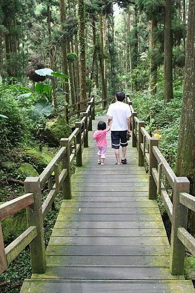 奮起湖南側步道漫步