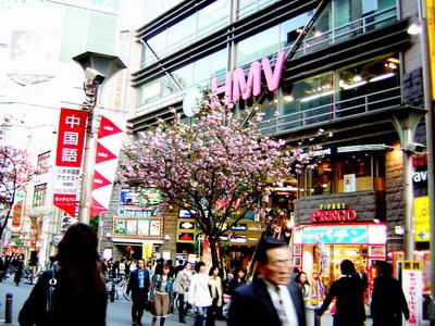 到處都是忙碌的人跟盛開的櫻花(剛好是櫻花季)