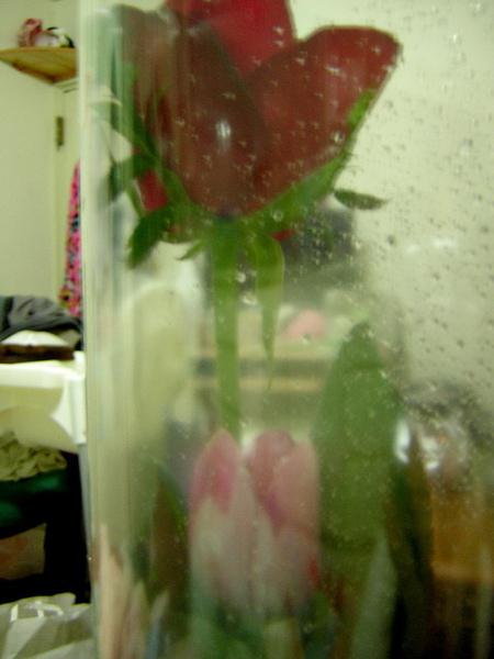 緊緊相依的2朵花..獅子說這2朵花就像我和小威爾