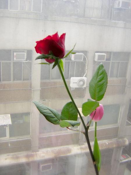 因為情人節剛好要去婆家..就把花兒們留在台北顧家