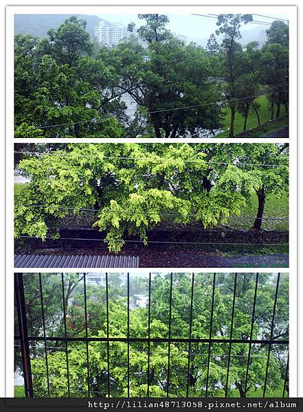 我家屋前那美麗的綠