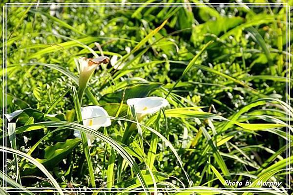 莉安的草山採花趣