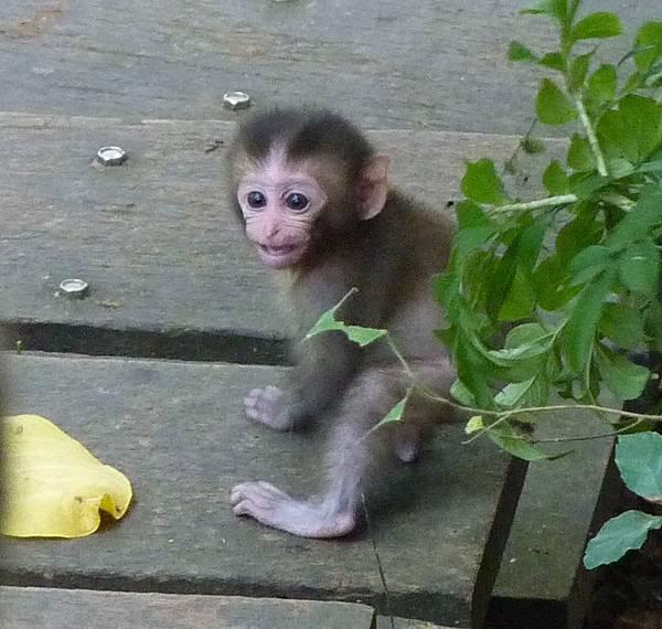 可愛小猴子.jpg