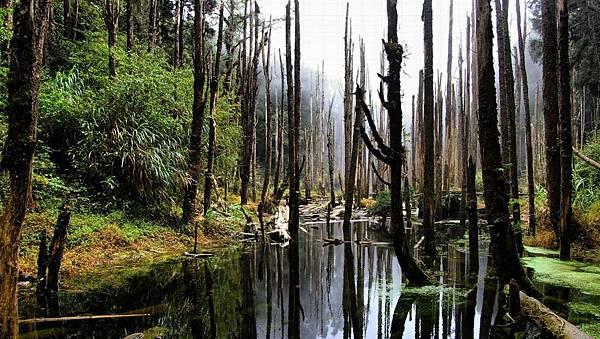 自助婚紗景點推薦-忘憂森林