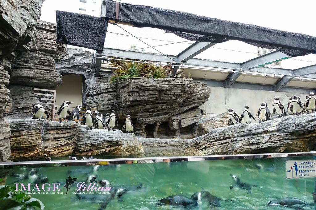 Aquarium-17.jpg