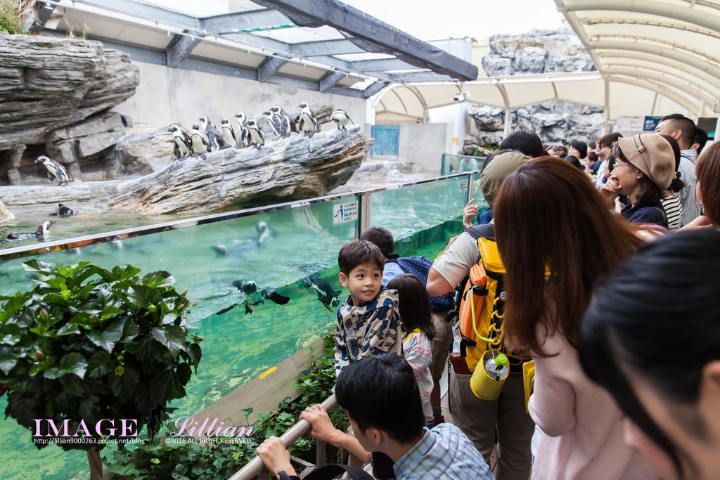Aquarium-26.jpg