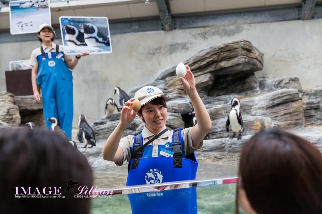 Aquarium-46.jpg
