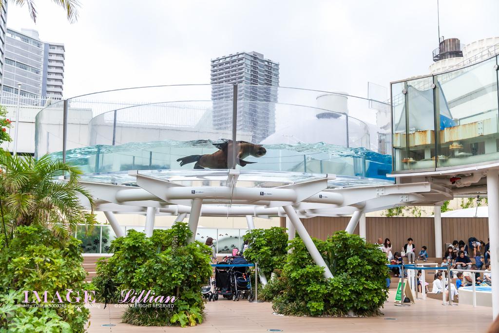 Aquarium-51.jpg